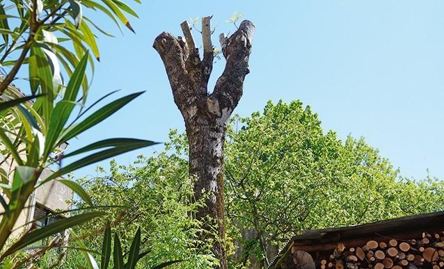 Matériel élaguer arbre